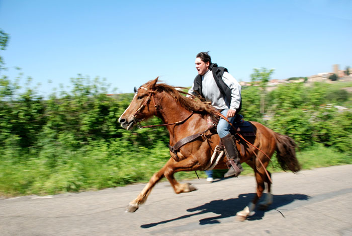 The help essays horses